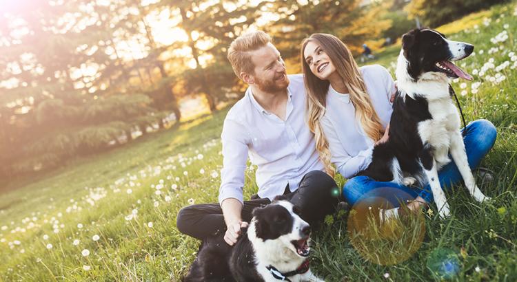 Casal em um campo ensolarado com os seus cachorros
