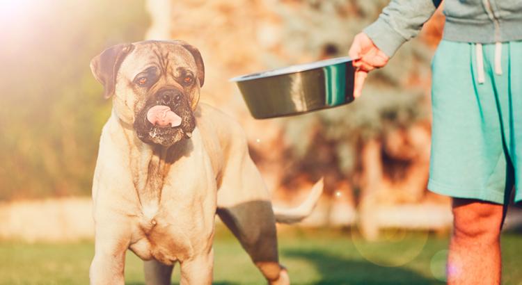Menino oferecendo uma porção de ração ao seu cachorro fofo
