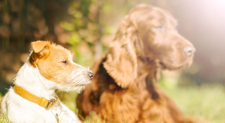 Dois cachorros brincando na grama em um dia ensolarado