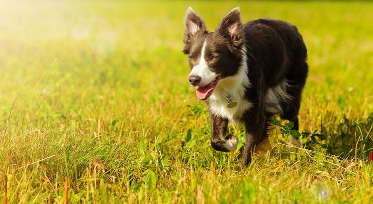 Cachorro andando na grama verde em um dia de sol
