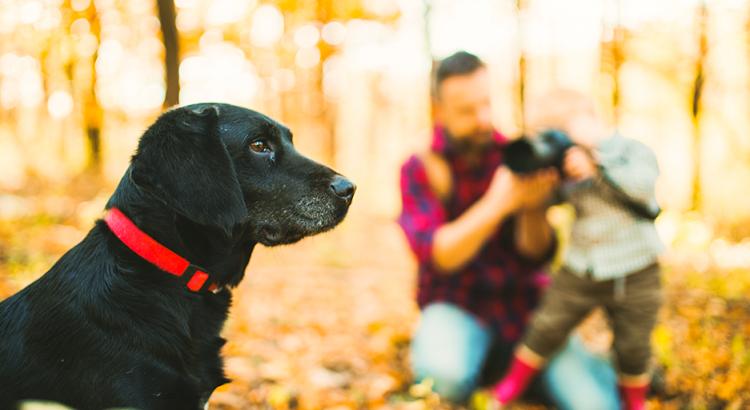 Cachorro no bosque sendo fotografado por uma criança e seu pai