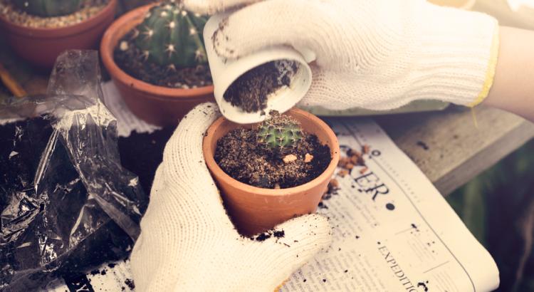 Mão de pessoa com luvas brancas mexendo com jardinagem