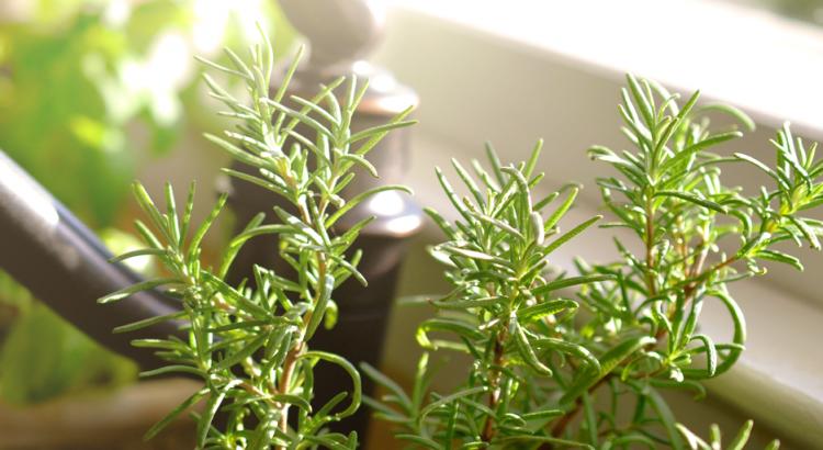 jardinagem: horta de temperos em cima de uma pia