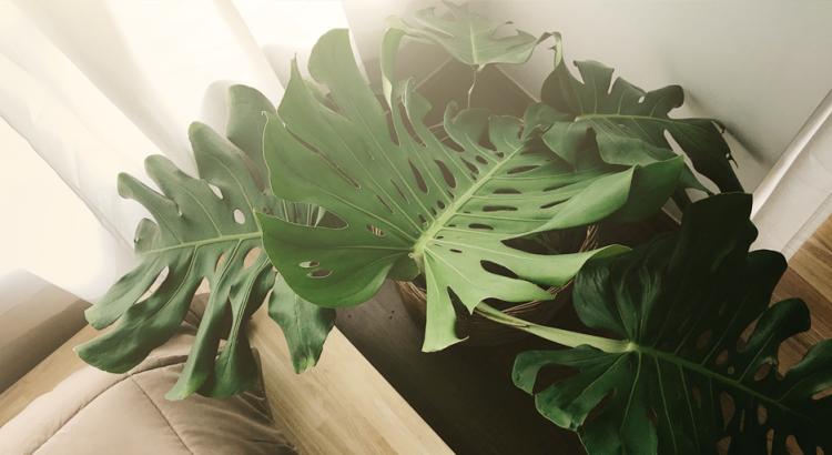 plantas em apartamento e casa. Como cultivar plantas em casa