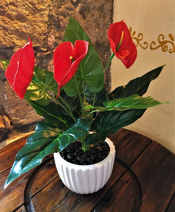 plantas para cultivar em casa: arturío