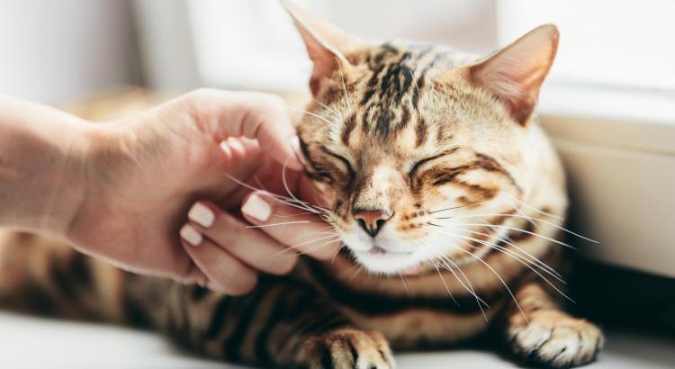 mão fazendo carinho do gato