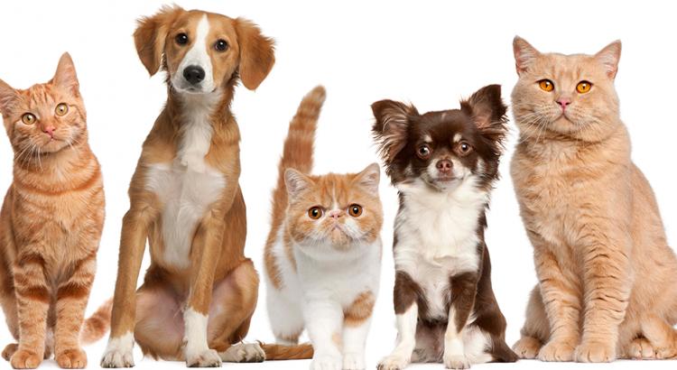 gatos e cachorros de raças diferentes