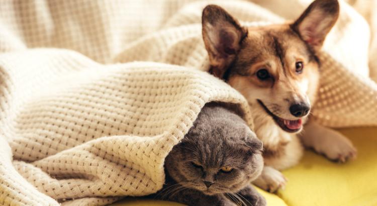 benefícios da castração em cães