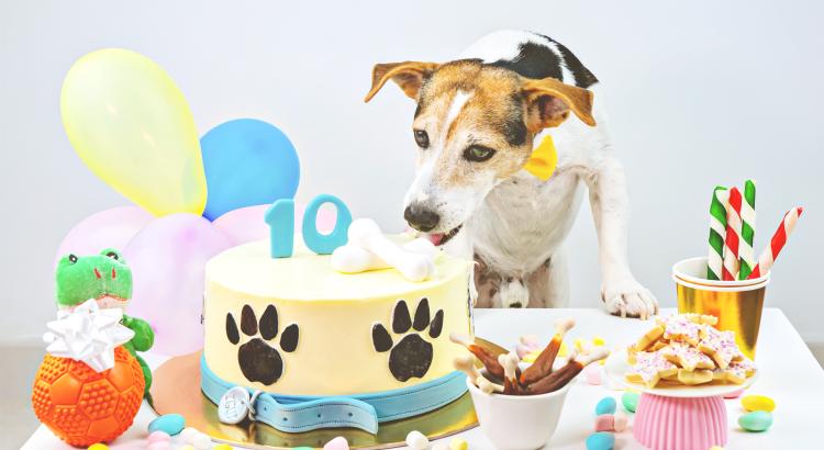 como fazer bolo para cachorro